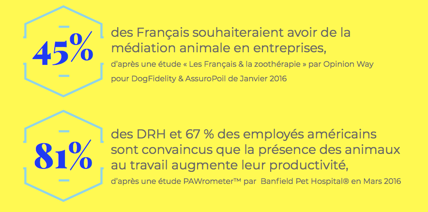 Mediation animale